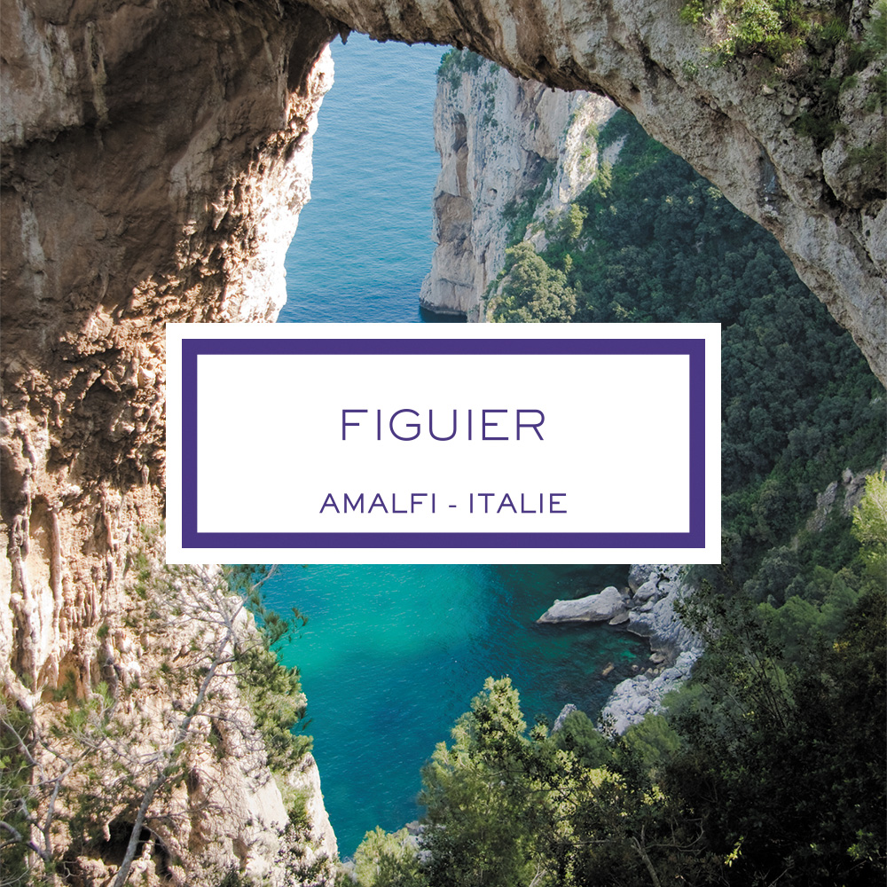 Fig Tree, Amalfi - Italy, Perfume Diffuser
