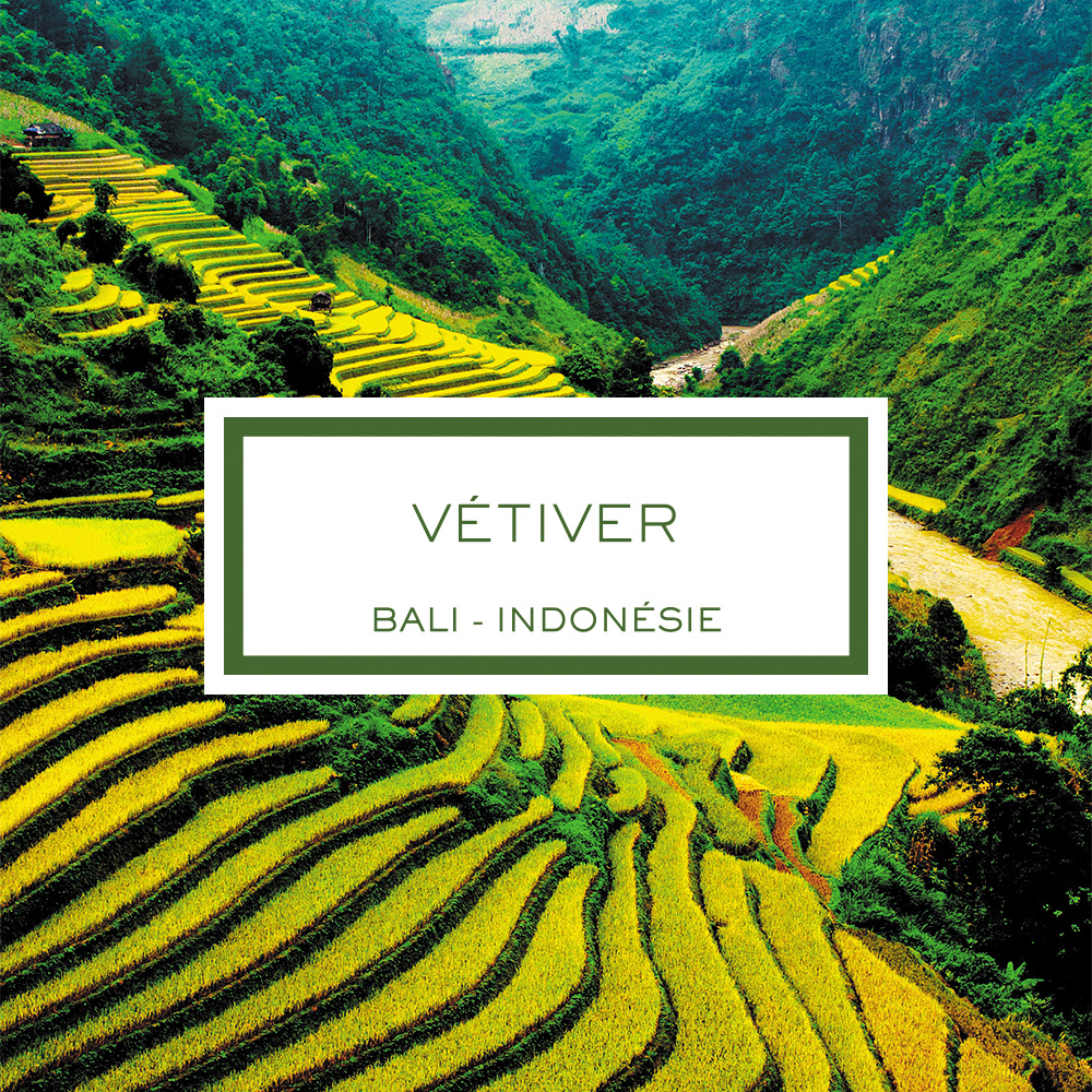 Vetiver, Bali - Indonesia, Perfume Diffuser