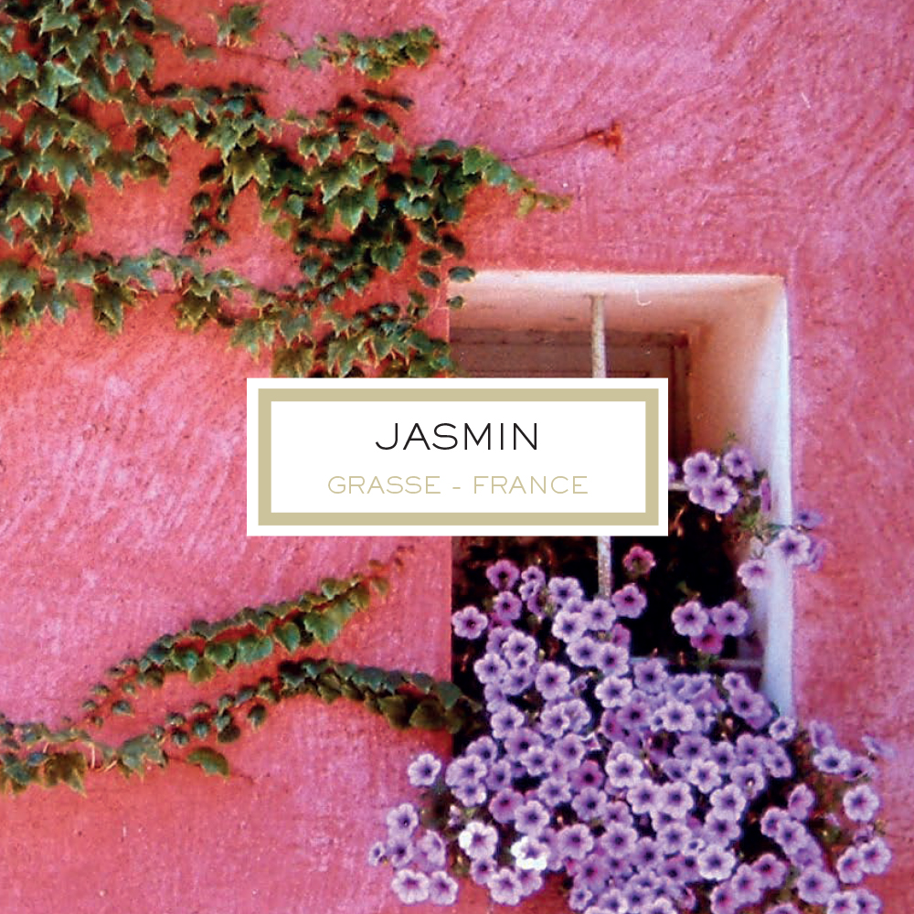 Anniversary Edition: Jasmine, Grasse - France, Scented Candle