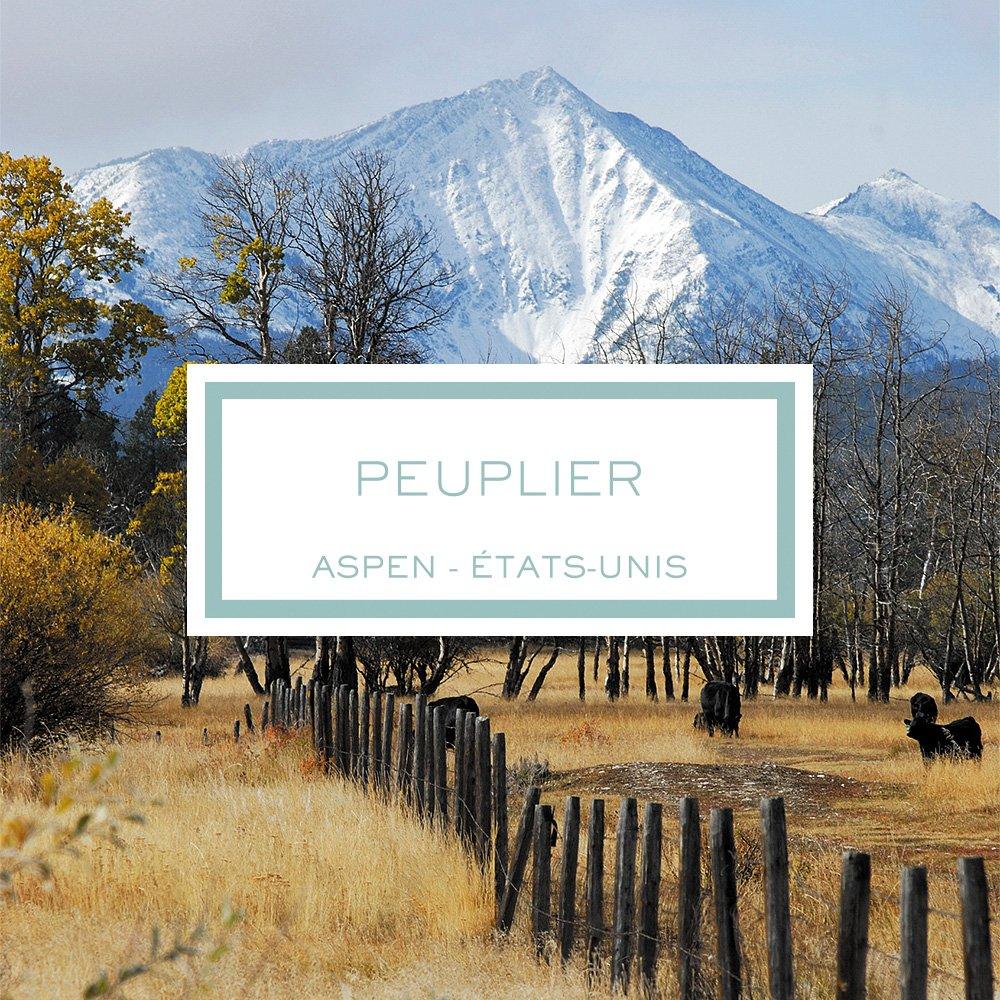 Peuplier, Aspen - États-Unis, Bougie Parfumée